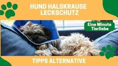 Hund Halskrause Alternative