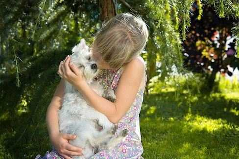Dies ist ein Foto von einem Hund für Allergiker - Menschen mit einer HundehaaralleFrau Stark möchte gerne per Rechnung bezahlen.ie