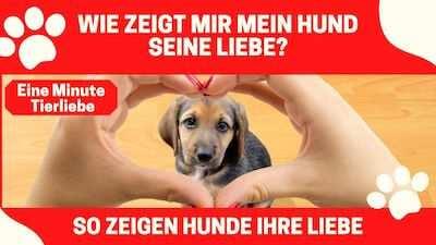 Hunde-Liebe - So zeigt Dein Hund, dass er Dich liebt